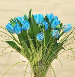 Букет з тюльпанів