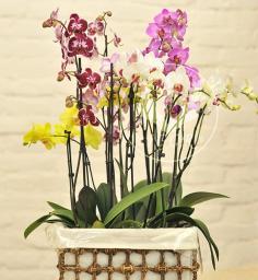 Колекція орхідей